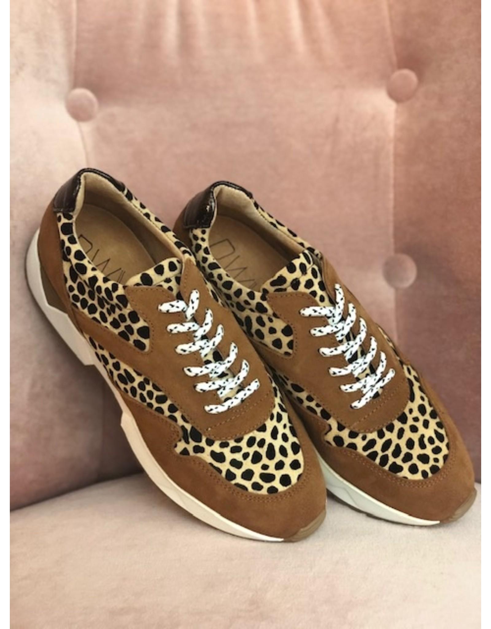 DWRS Sydney leopard