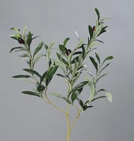 Olivenzweig mit Oliven