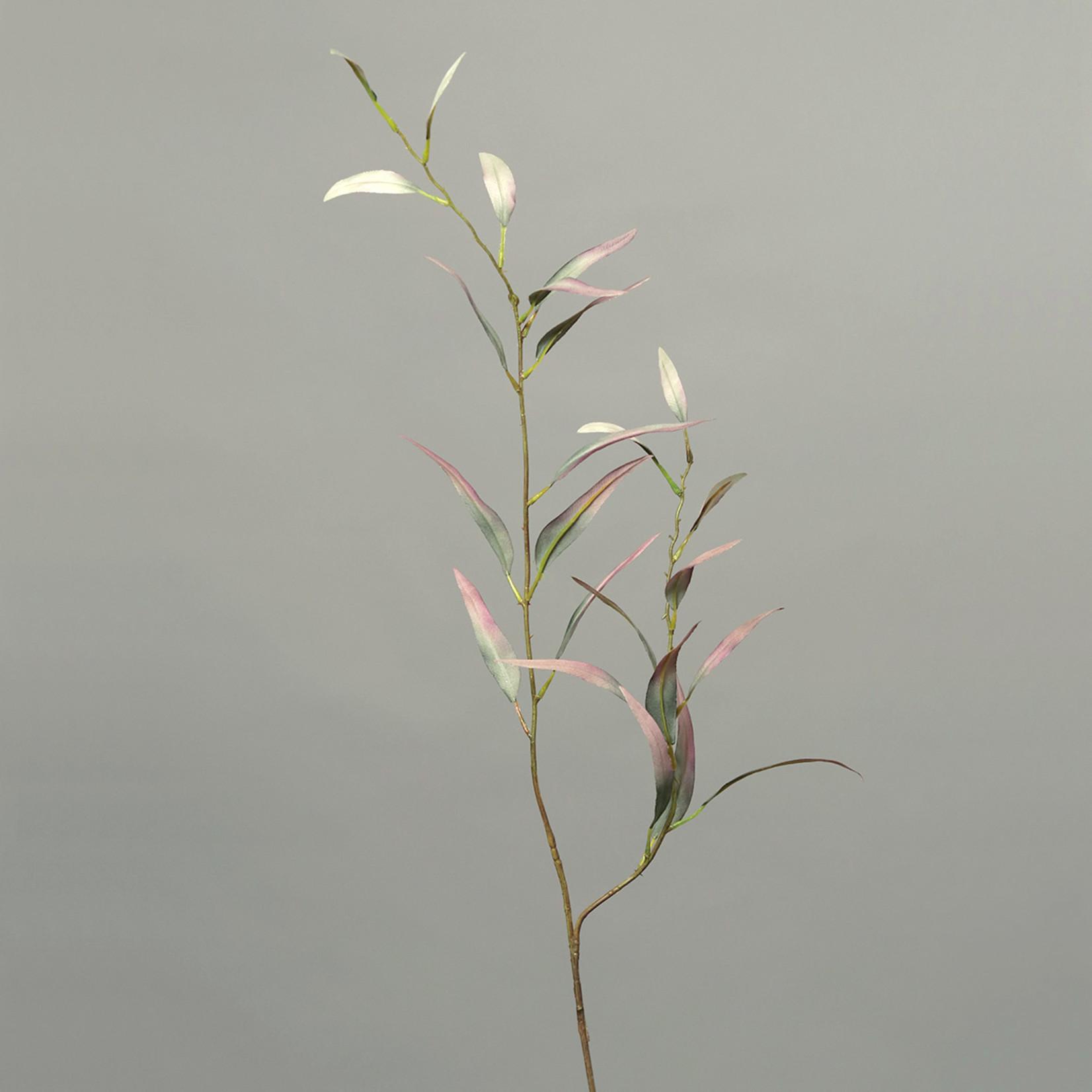 Eukalyptus Zweig rot/grün