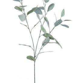 Eukalyptus Zweig matt