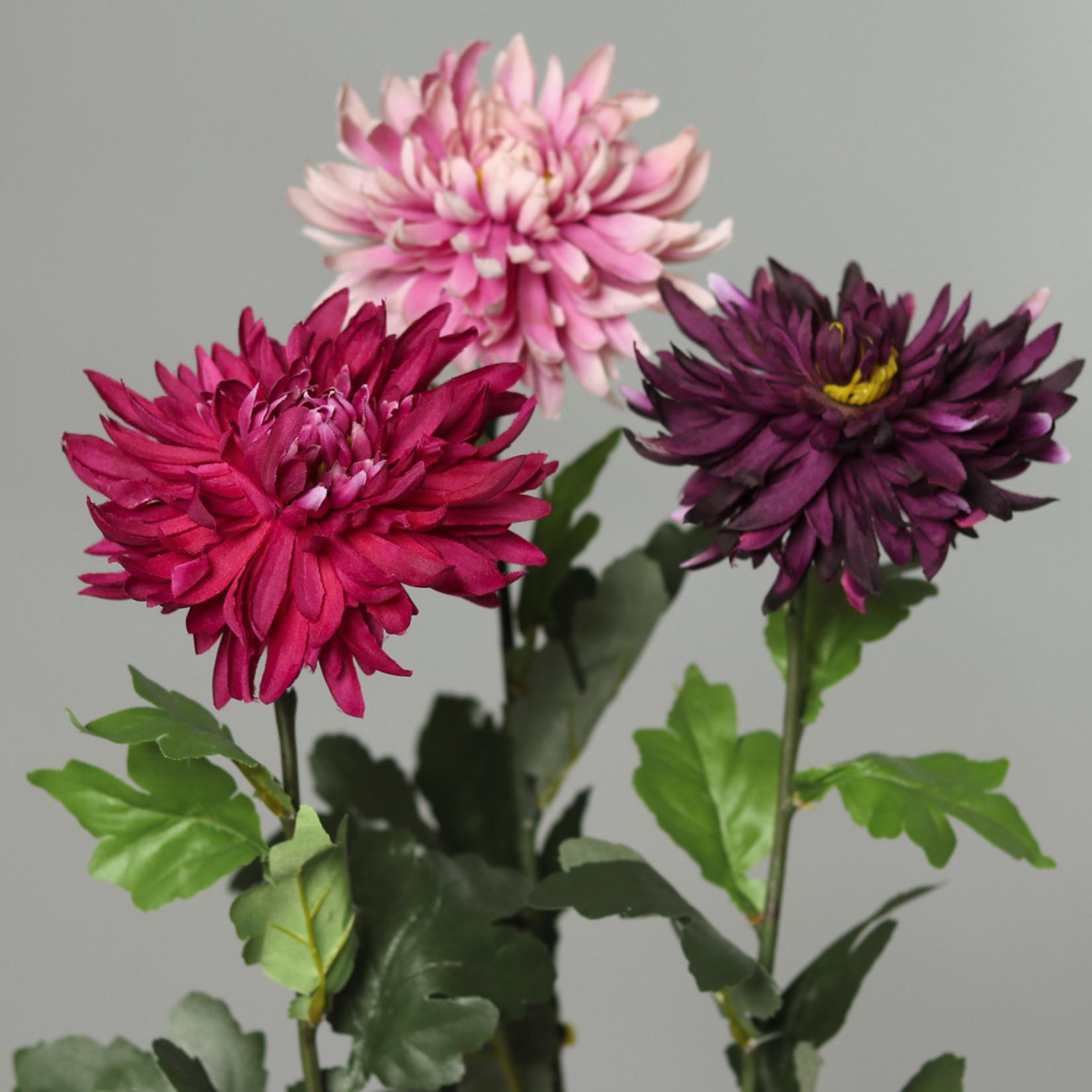 Chrysanthemen verschiedene Farben