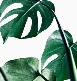 Artprint Monstera grün
