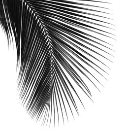 Farn Artprint