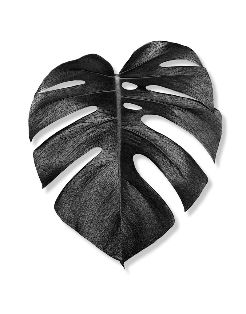 Monstera black and white print