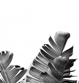 Palmen Artprint blackandwhite
