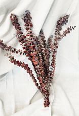 Eukalyptus Baby Red