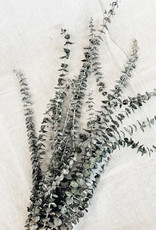 getrockneter Eukalyptus Baby blue