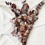Eukalyptus Rot