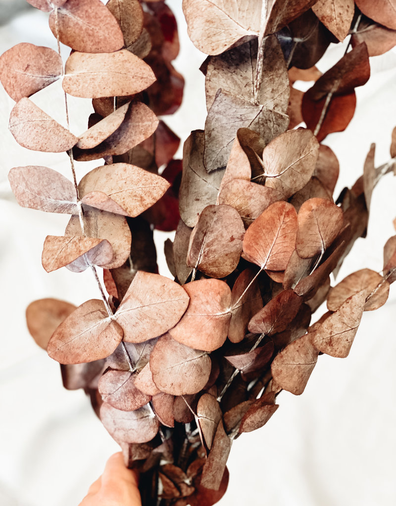 getrockneter Eukalyptus im Bund