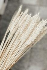 Weizen gebleicht
