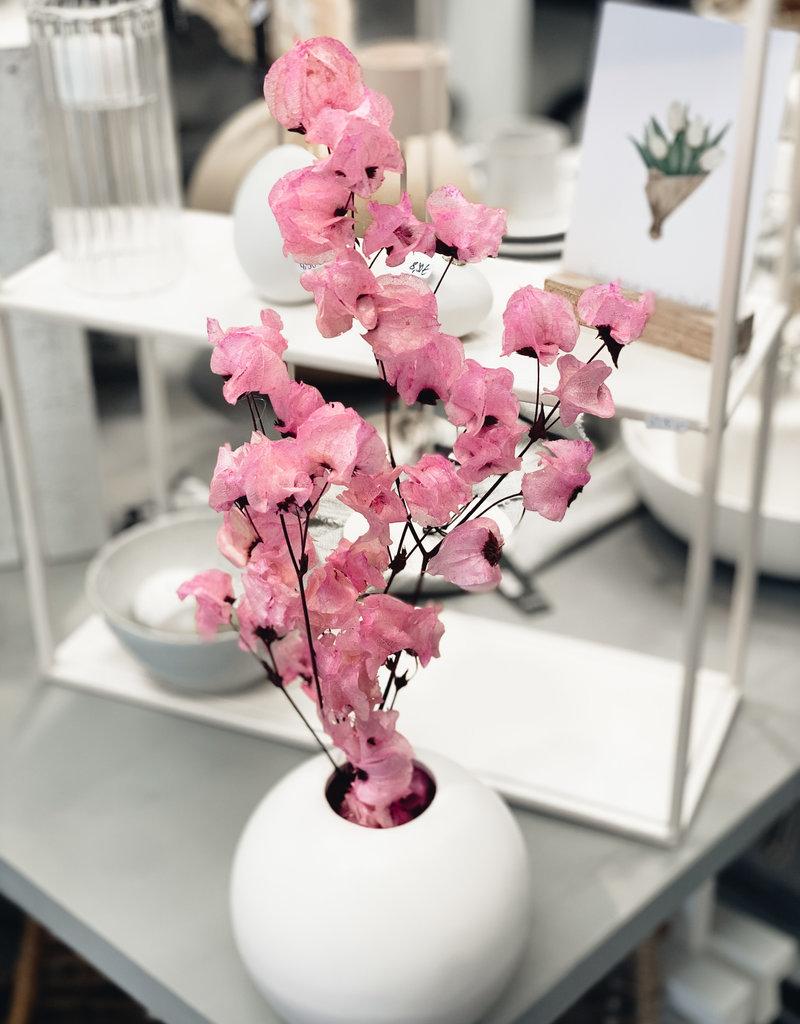 Zweig Bougainvillea Pink