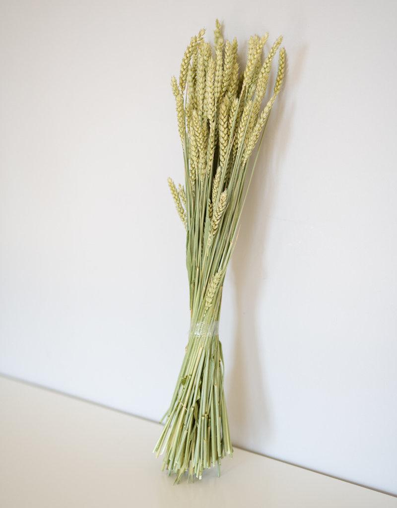 Weizen natur grün