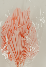 Palmsper klein rosa