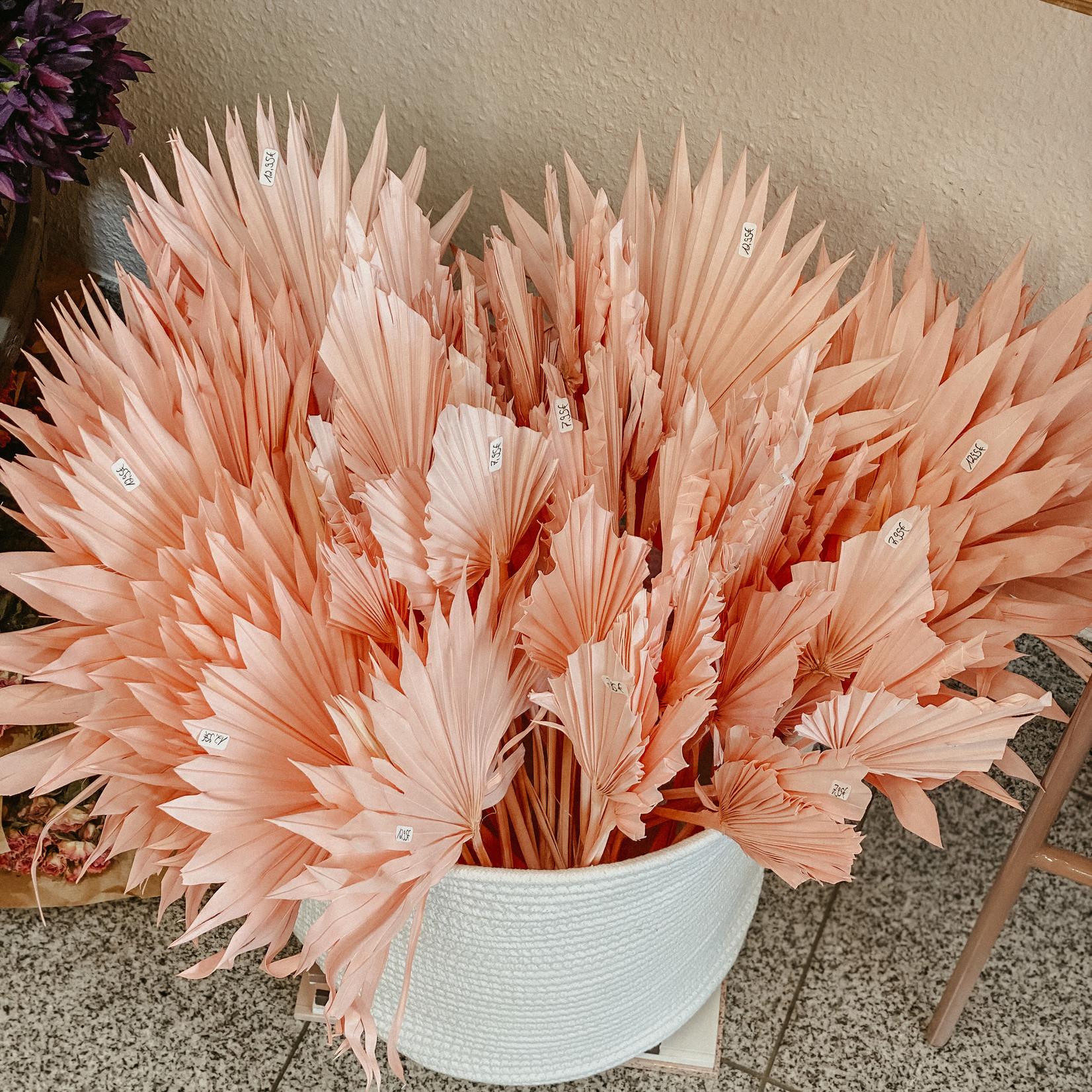 Palmsper groß rosa