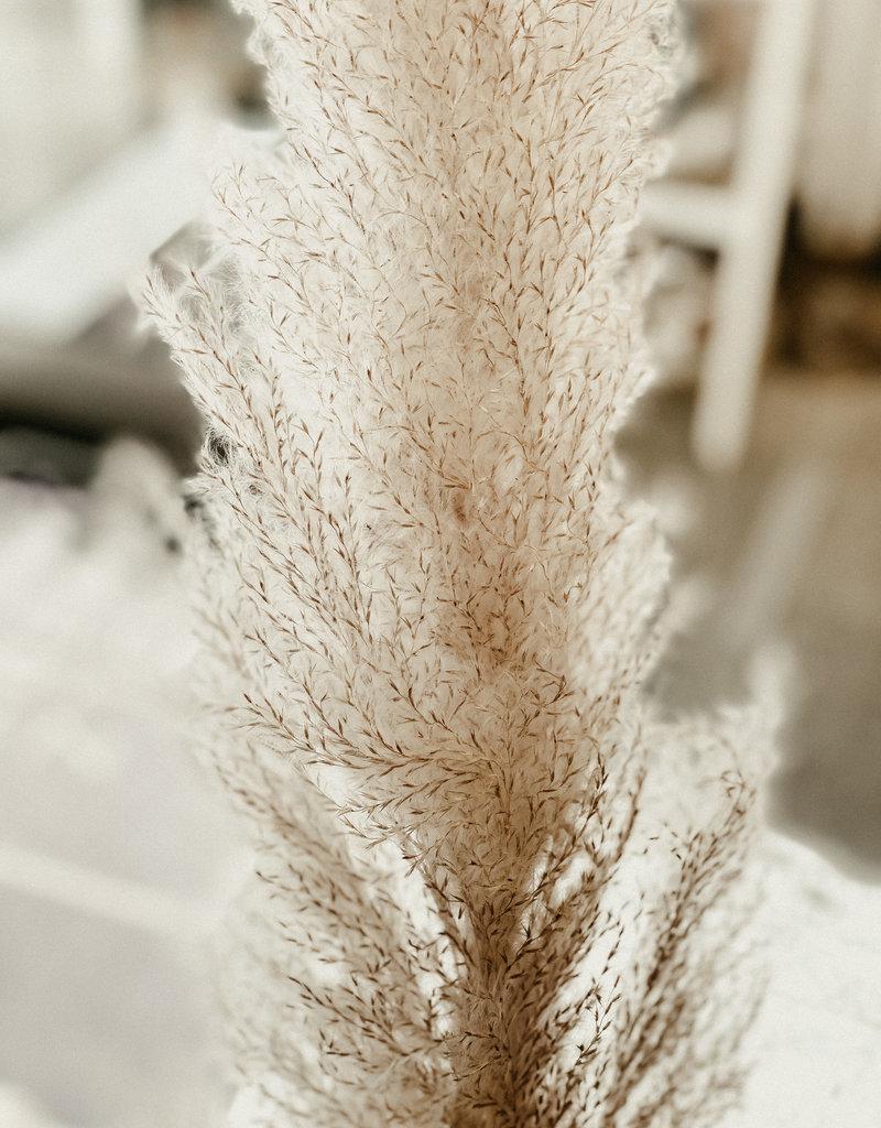 Jolipa  Pampasgras fluffig grau