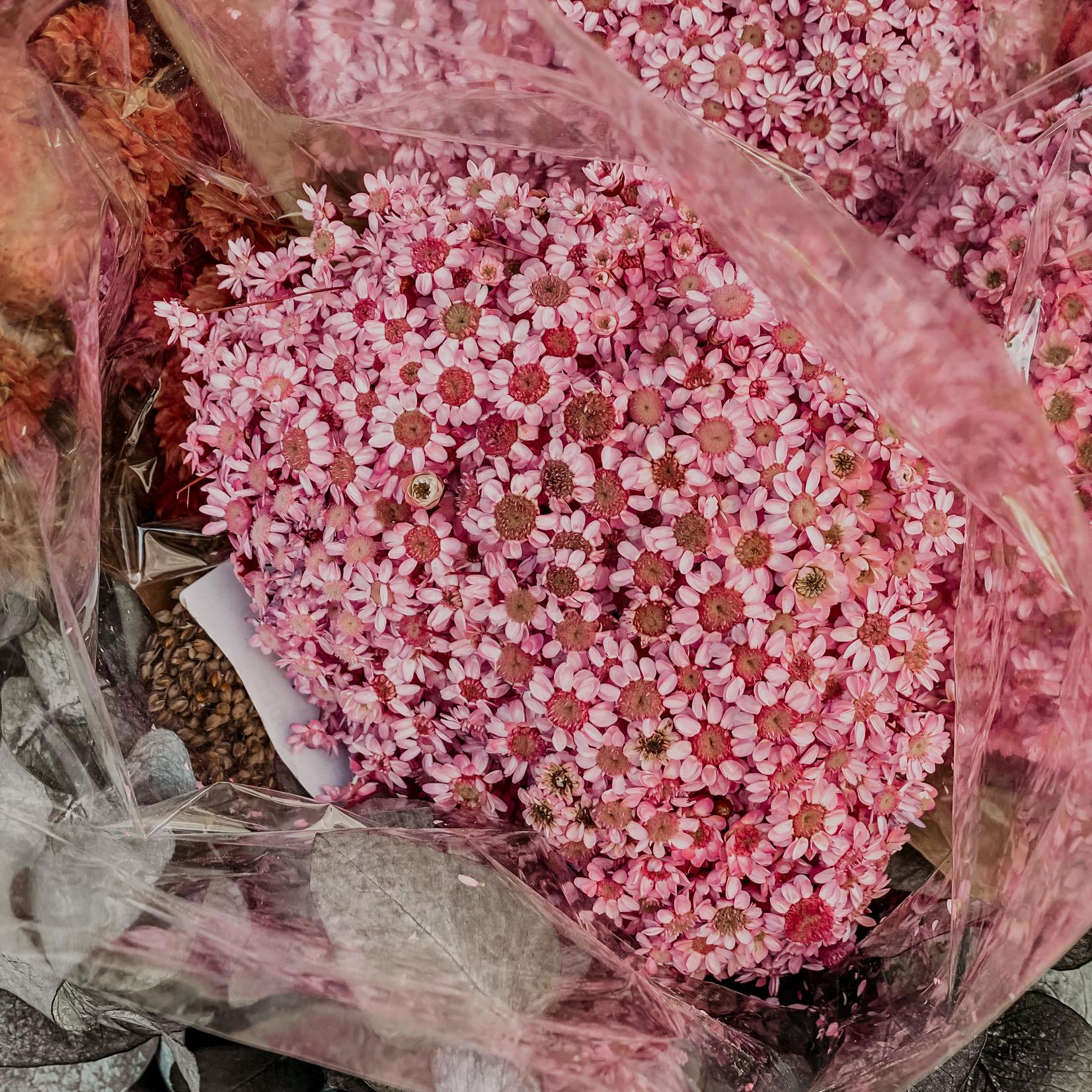 HBX Glixiablüten rose