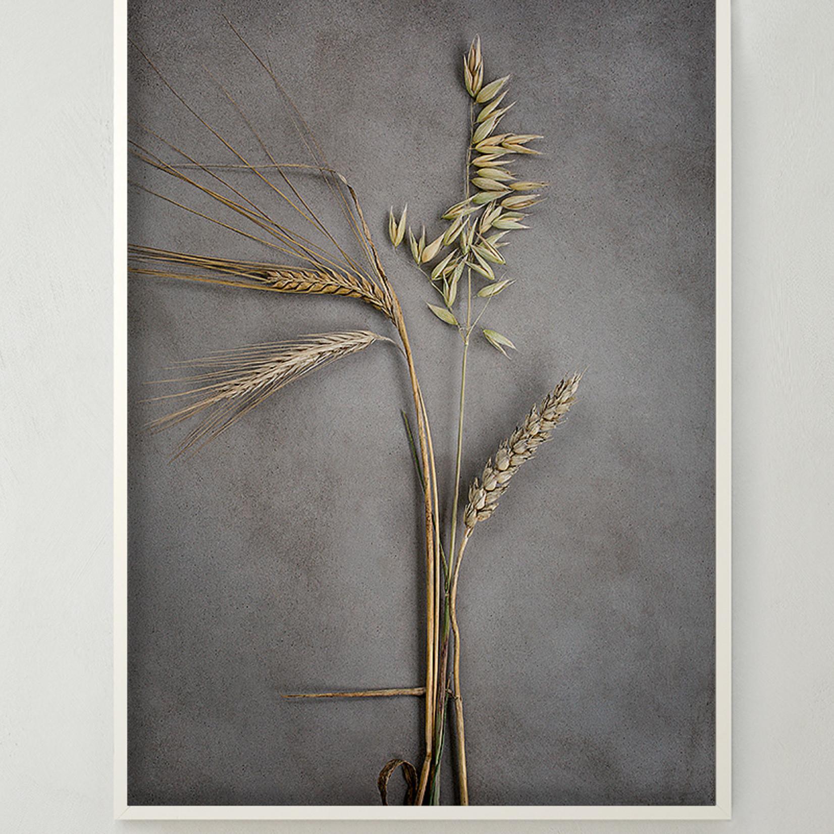 Storefactory  Poster Four Grains