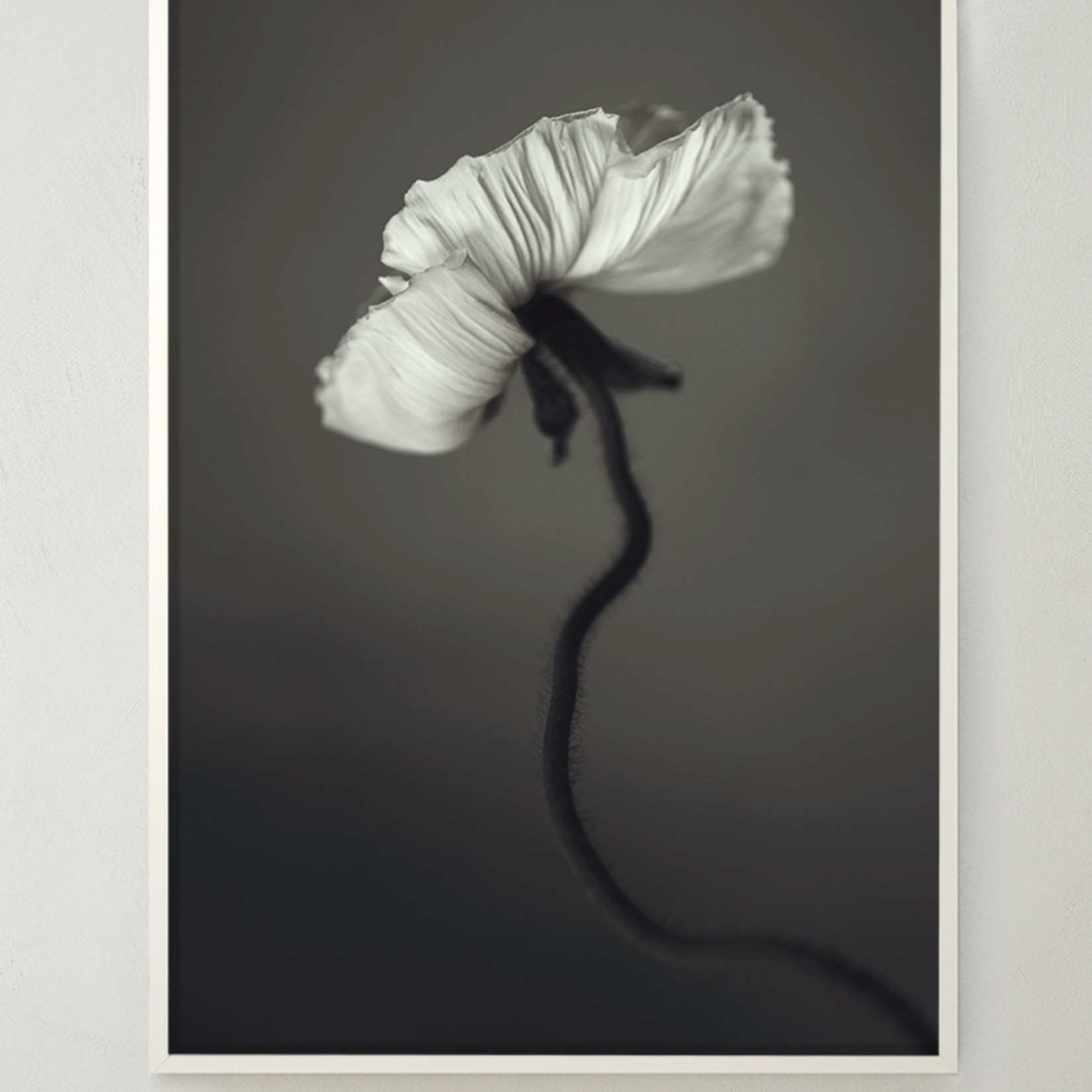 Storefactory  Poster Papaver