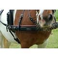 Kieffer Easy go pair harness Shetland