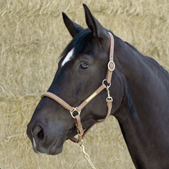 Kieffer Elegance leather stable halter