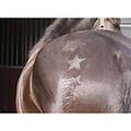 QHP QHP Satz Bürstenmuster Pferd / Pony
