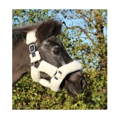 HB Showtime Harry and Hector Fluffy halter Navy