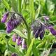 Le Savon Noir Smeerwortelzalf met Lavendel