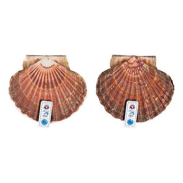Coquilles per schelp (+/-200 gram)