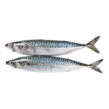 Makreel (Heel) 1000 gram