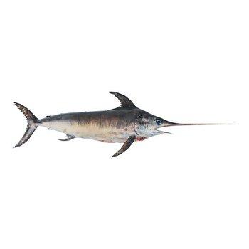 Zwaardvis (heel) 15 kilo