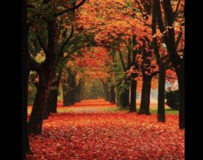 Herfst/Winter 2021-22