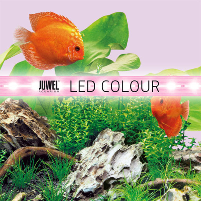 Juwel LED Colour 1200 mm 31 watt