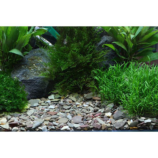 Dennerle Plantahunter natuurgrind Rio Xingu 2-22 mm, 5 kg