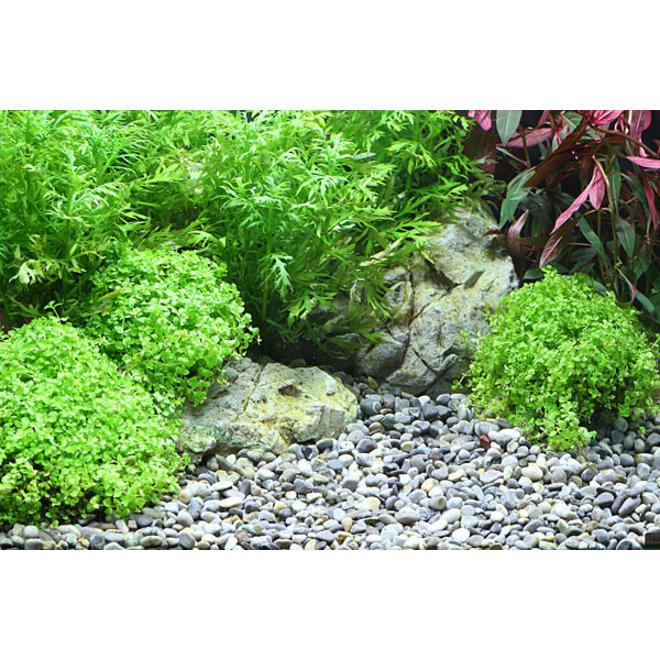 Dennerle Plantahunter natuurgrind River S 4-8 mm