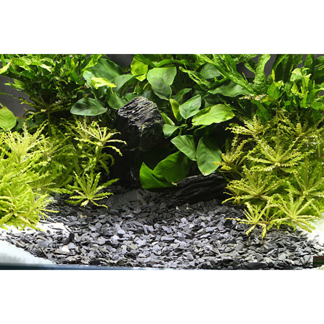 Dennerle Plantahunter natuurgrind Baikal 3-8 mm, 5 kg