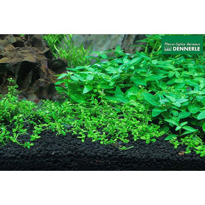 Dennerle Scaper's Aquarium Soil 4 liter, korrel 1-4 mm