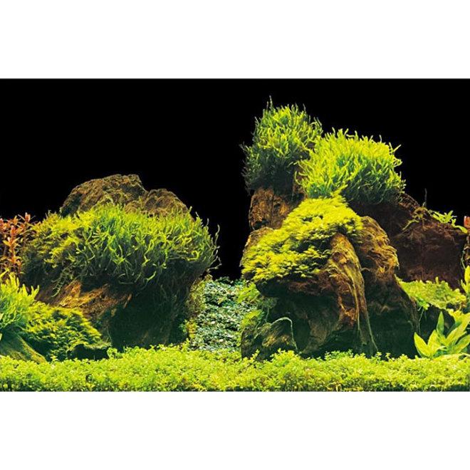 Aqua Nova achterwand poster L 100x50 cm plant / rots motief