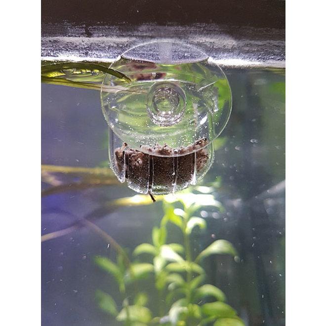 APO glass pot feeder, glazen voerkorf 4 cm