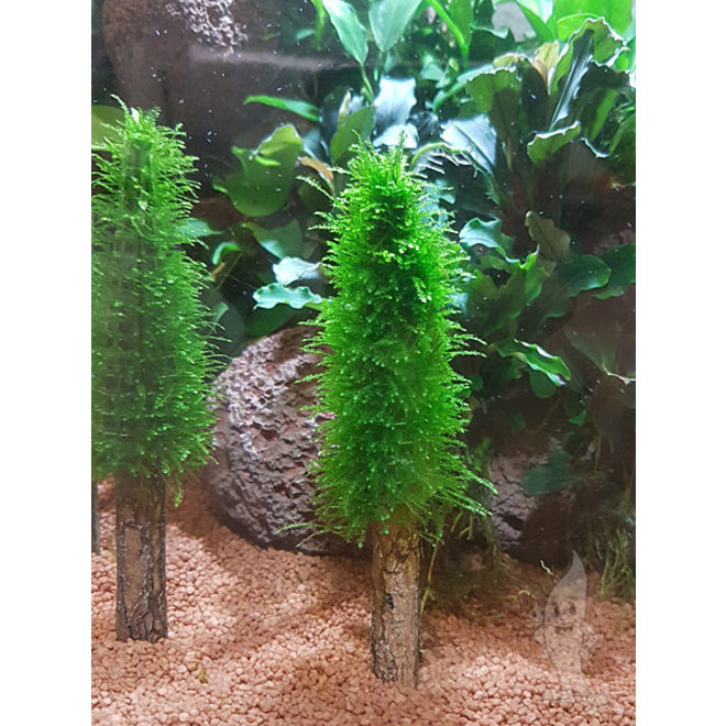 APO Aquarium decoratie boom