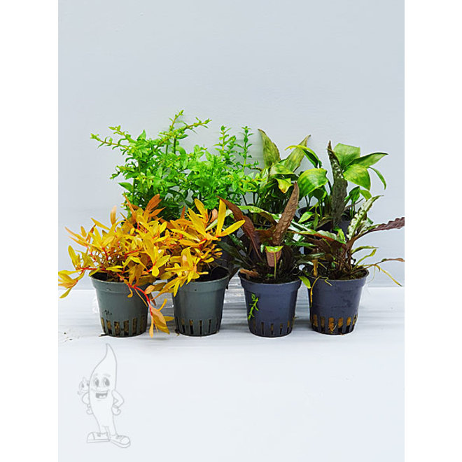 APO planten pakket speciaal