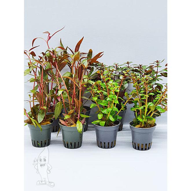 APO planten pakket rood