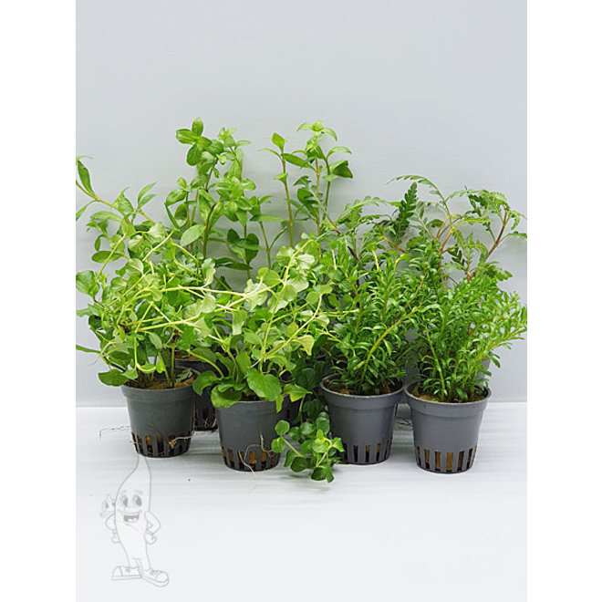APO planten pakket groen
