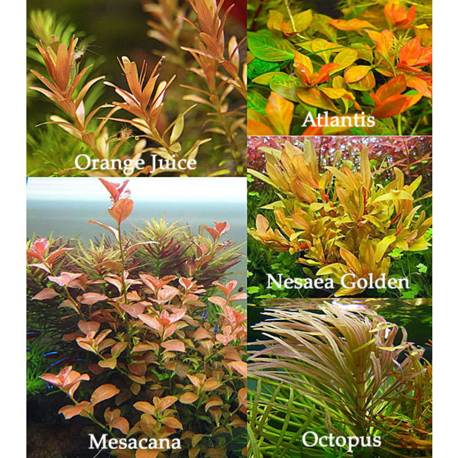 APO planten pakket ORANJE