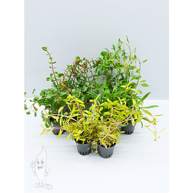 APO EK planten pakket ORANJE