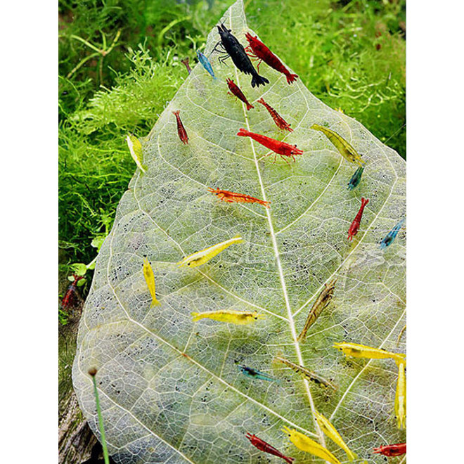 Dennerle Shrimp King Dadap Leaves, bladvoer voor garnalen en kreeften