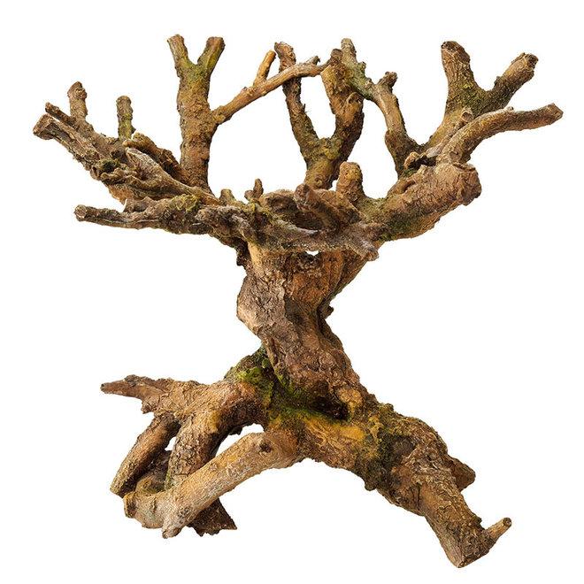 Aqua Della bonsai bruin