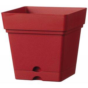 Pot carré 38 cm griotte (roules et réservoir d'eau)