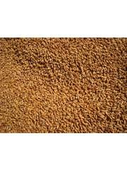 Wheat (1 kg)