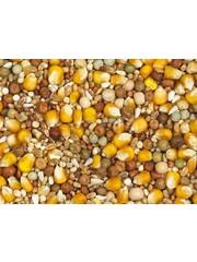 Vanrobaeys Breeding yellow Cribbs maize (No. 2)
