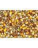 Vanrobaeys Kweek gele Cribbs maïs (Nr. 2)